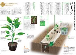 夏野菜植えつけ虎の巻