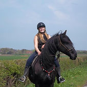 friesian horse being ridden in rope halter & rhythm beads