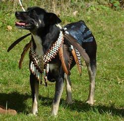 beaded native american dog costume