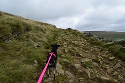 dog hiking lake district pink lead