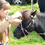 Pony having rhythm beads put on