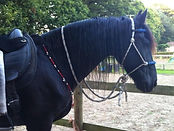 friesian horse wearing rhythm beads and rope halter