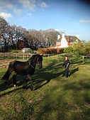 friesian hore being lunged