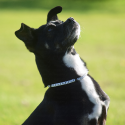 Beaded ID Dog Necklace - White and Black