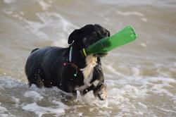 dog in sea fetching bottle
