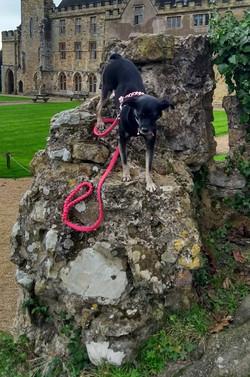 dog climbing pink hi vis paracord