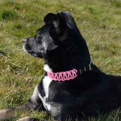 Pink paracord woven dog collar