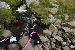 dog pink hi vis paracord lead