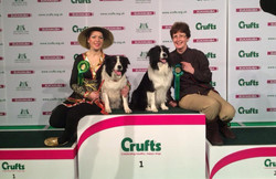 dog at crufts paracord collar/lead