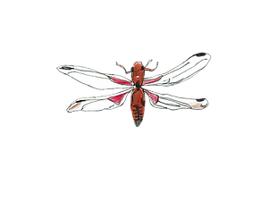 dragonfly3.png