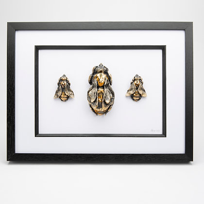 Large Framed Bee Collection