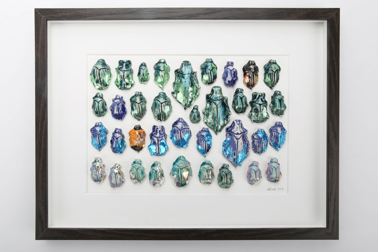 Beetle Collection Frame.jpg