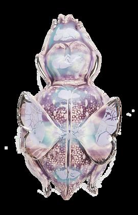 Lilac Weevil Beetle