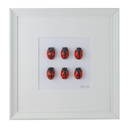 Ladybird Collection