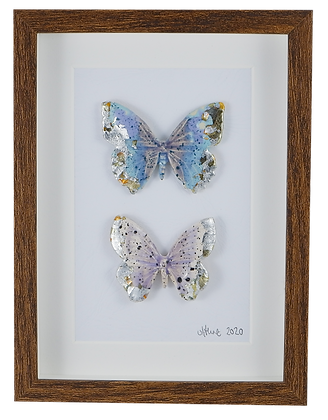Lucid Dreamers Butterfly Collection