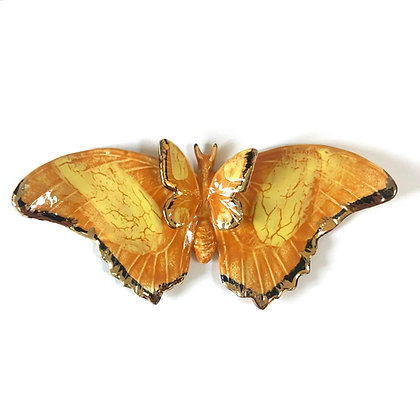 Large Comet Butterfly