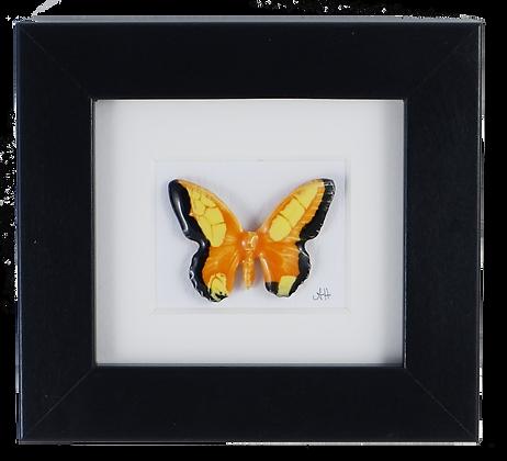 Jack o' Lantern Small Butterfly
