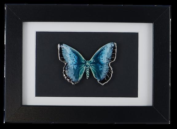 Darkest Nebula Butterfly