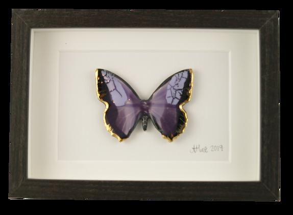 Super Nova Butterfly