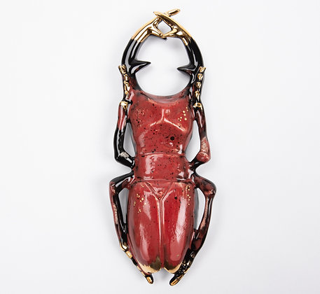 Large Queen Stagbeetle