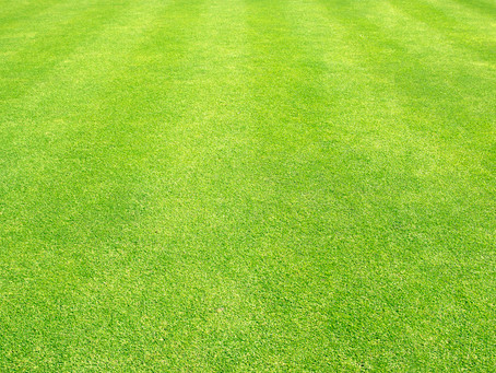 TOP Tips to Wake Up Your Lawn for Spring