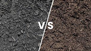 soil-vs-mushroom.jpg