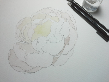 Peony in progress. Watercolor on paper.