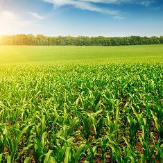 shutterstock_cornfield-1-e1465899407578.