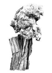 Epicormic woody