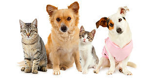 file_21032_the-most-popular-dog-and-cat-
