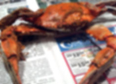 Maryland steamed blue crab