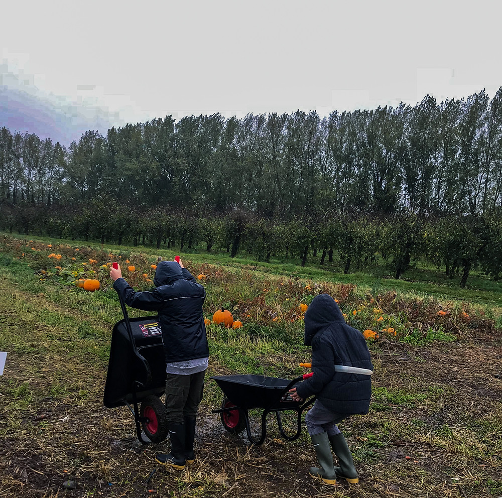 Aiden and Alex in charge of wheelbarrows | Pumpkin Picking at Hewitt's Farm | Pumpkin Risotto | Vegan and Gluten Free Recipe | The Dopey Vegan