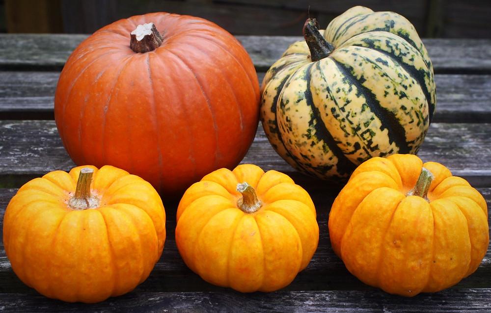 Pumpkins | Munchkin Pumpkin Chia Pudding | Vegan and Gluten Free Recipe | The Dopey Vegan