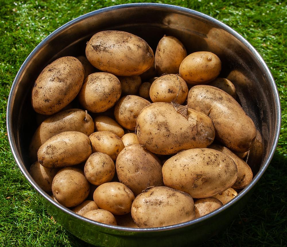 My garden potatoes | Bravo Potatoes | Patatas Bravas | Vegan and gluten free recipe | Vegan patatas bravas | The Dopey Vegan