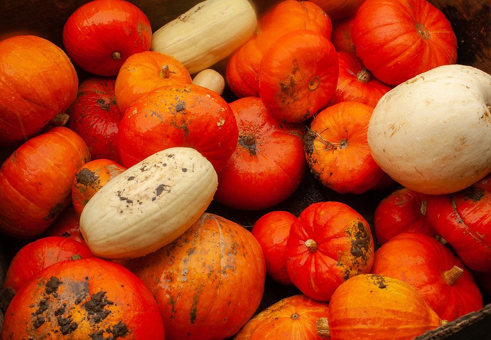 Orange Pumpkins | Pumpkin Picking at Hewitt's Farm | Pumpkin Risotto | Vegan and Gluten Free Recipe | The Dopey Vegan