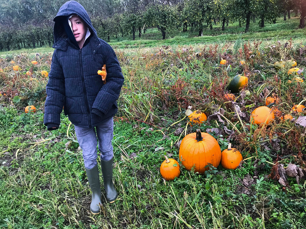 Aiden choosing a pumpkin | Pumpkin Picking at Hewitt's Farm | Pumpkin Risotto | Vegan and Gluten Free Recipe | The Dopey Vegan