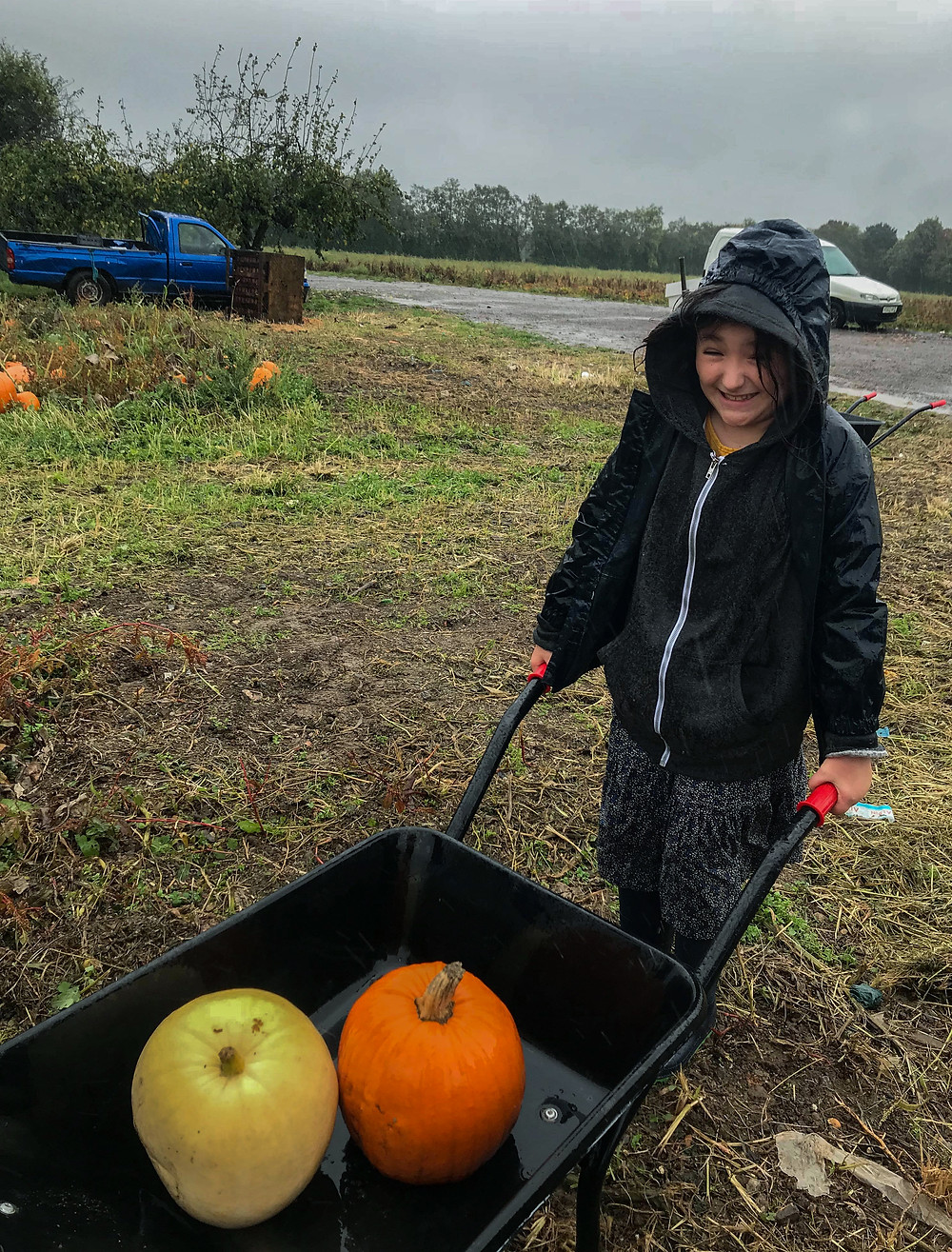 Ophelia and the wheelbarrow | Pumpkin Picking at Hewitt's Farm | Pumpkin Risotto Recipe | Vegan and Gluten Free Recipe | The Dopey Vegan