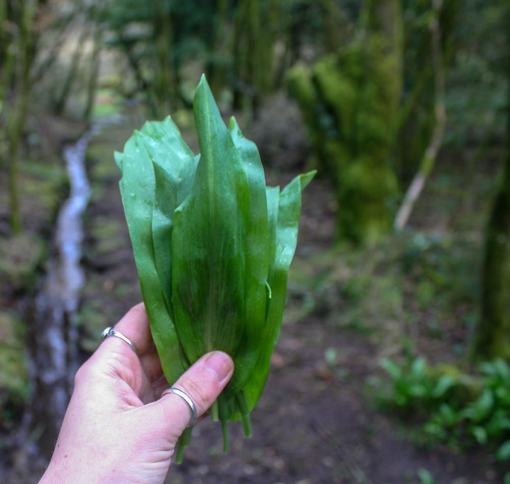 Handpicked wild garlic  | Spring Green, Shiitake Mushroom and Wild Garlic Risotto | Vegan and gluten free recipe | The Dopey Vegan