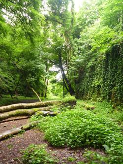 Walled Faery Glen