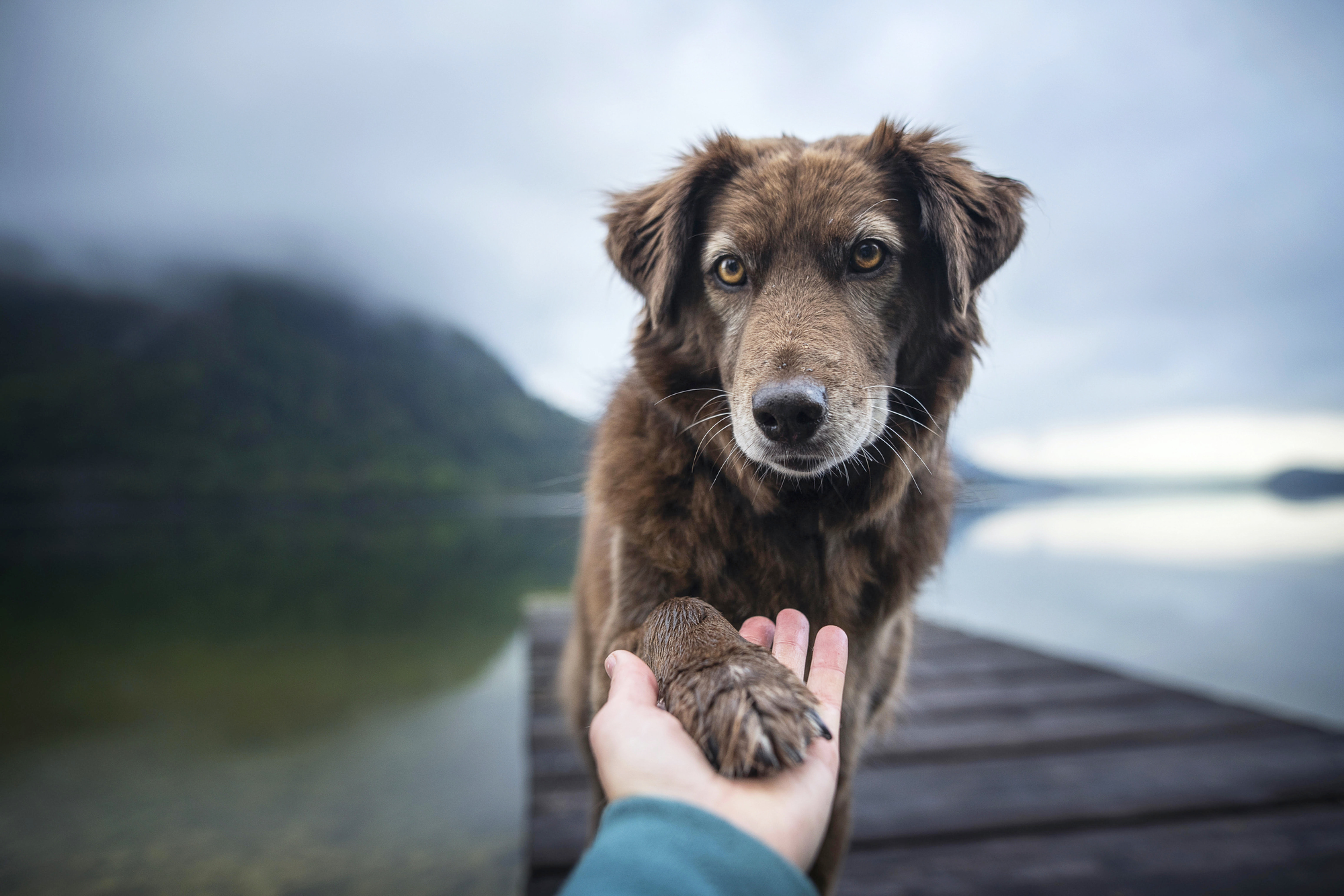 LEARN HOW TO SPEAK DOG!