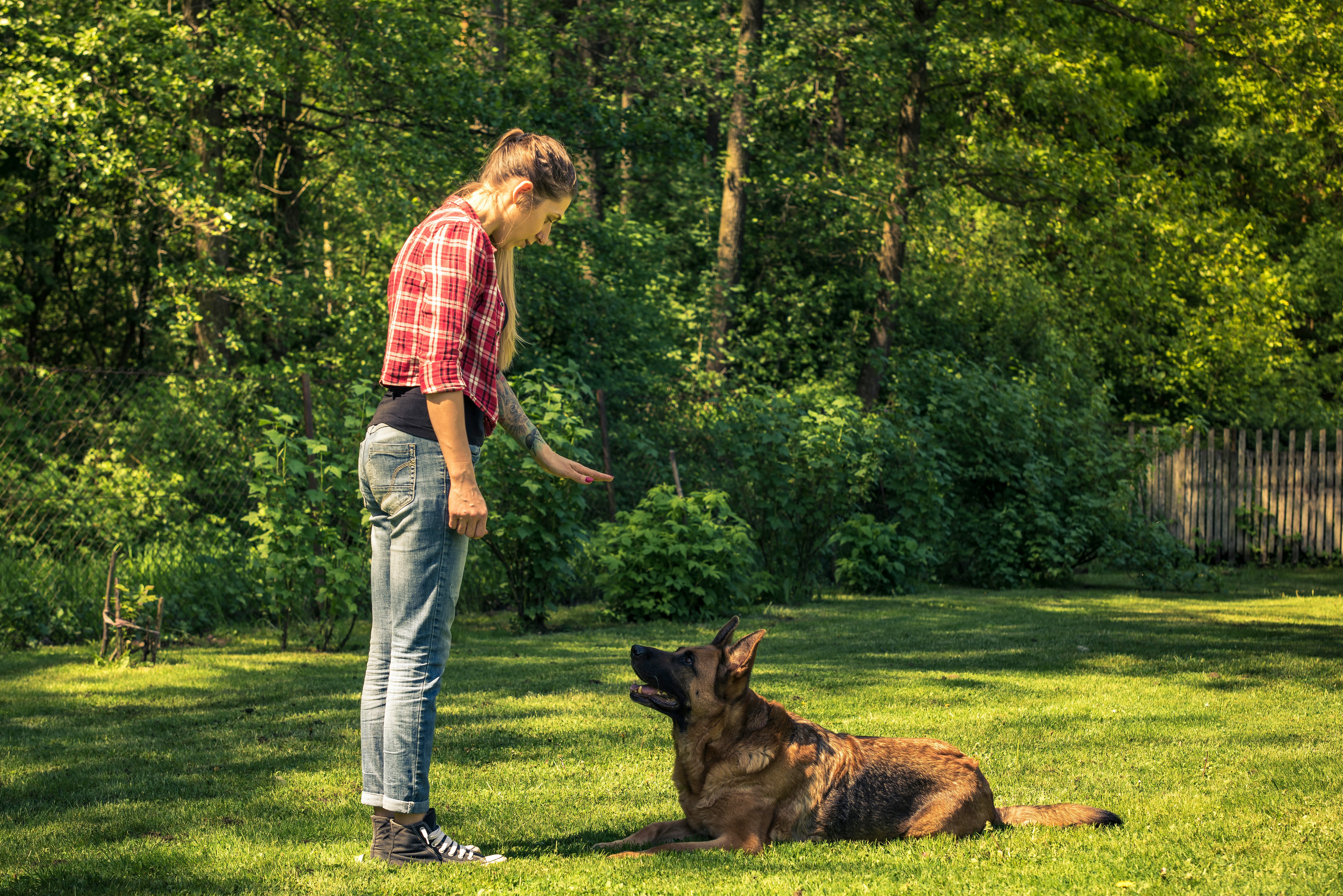BASIC OBEDIENCE 2