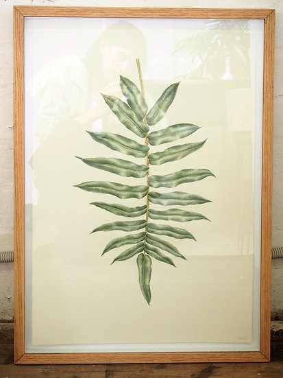 Hard Water Fern Painting - Framed
