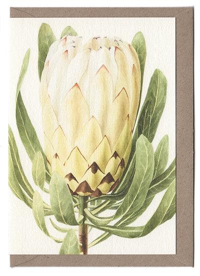 White Protea Card