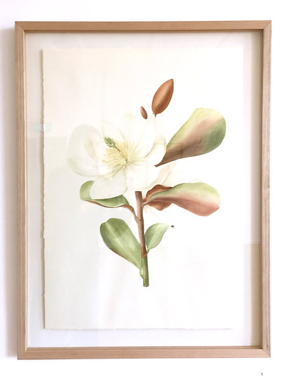 Magnolia Painting - Framed