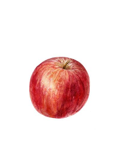 Apple Giclée Print