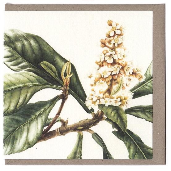 Loquat Flower Card