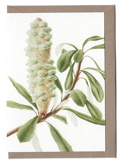 Banksia Cone Card