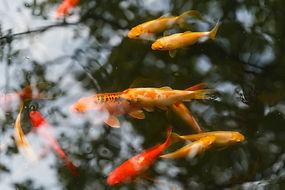 pond3small.jpg