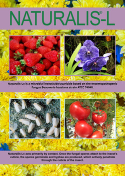 Naturalis-L Brochure