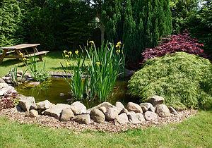 pond edgeSMALL.jpg